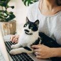 猫がイタズラをするのは飼い主に原因がある?イラズラする4つの心理…