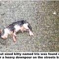 雨の日に道路上で産み落とされ置き去りにされた子猫の運命は...
