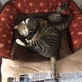 猫にケージって使ってる?我が家にある『1段と2段ケージ』の使い方!
