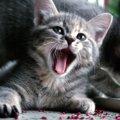 猫がはしゃいでる時はどんな仕草をする?8つの特徴をご紹介します♪