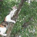 木に登った子猫を助けようとする母猫!しかし意外な結末が…