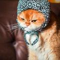 猫の怒り顔26連発!睨みを利かせたクールなネコ達を一挙ご紹介