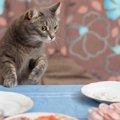 猫が忘れない6つの事