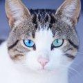 猫の視力はどれぐらい?猫が見ている世界の見え方とは