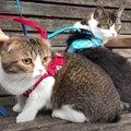 親子猫がお散歩に挑戦!そわそわする姿が可愛すぎる猫ちゃんたち♡