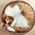 猫の毛色別でわかる『性格の特徴』4選