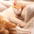 猫が眠る位置や姿で分かる飼い主への信頼度
