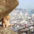 こんなことしてたんだ!猫に優しい4つの都道府県