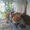仲良く並んでお食事『猫の餌台』を手作りする方法