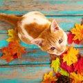 猫にNGな『秋の食べ物』5選