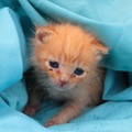 猫の引き取りや譲渡を行っている団体と必要な準備