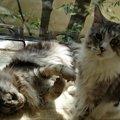 大地真央の愛猫はどんな子?アレルギーでも飼えている理由