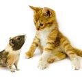 猫に鎖骨がない理由とメリット、他の動物との違い