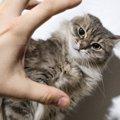 猫の虐待、多頭崩壊を見つけたらする事