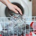 猫が好きな人だけにしてしまう『イタズラ』5つ