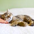 猫の寝床を選ぶ基準と好きな素材とは