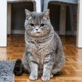 猫の『ストレス』を早期発見する方法4つ!注意すべき危険サインとは?