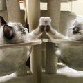 Laylaの12猫占い 9/16~9/22までのあなたと猫ちゃんの運勢