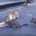 子猫の食事タイムを守る母猫が強い!