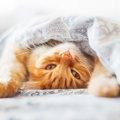 動物虐待に厳罰を!2018年「動物愛護法改正」に署名募る