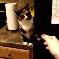 飼い主さんに休肝日を設ける為、冷蔵庫に検問を張る猫ちゃん