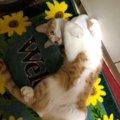 猫にまたたびを与えるとどうなる?正しい与え方とは