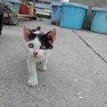 宮城県にある猫島 その共和国プロジェクトとは