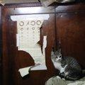 実録!猫が増え多頭飼育崩壊に…一人暮らしのおばあちゃんのお家にいた猫40…