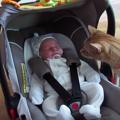 突如お家に赤ちゃんが現れた・・・!小さな赤ちゃんに猫はビビりまく…