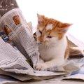 猫が新聞やチラシの上に乗るのはなぜ?猫を困らせずにおろしてあげる…