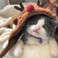 LAYLAの12猫占い【12/14~12/20】のあなたと猫ちゃんの運勢