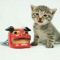 まだ間に合う年賀状に使える猫のかぶりもの6選!