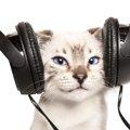 研究者が作った猫にとって快適な音楽