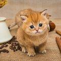 猫は豆を食べても大丈夫?与えていい物や効果について