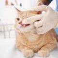 猫の口が臭い時の原因や考えられる病気、その対応策