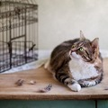 猫にケージを使う時のメリット・デメリット。使う時の注意点