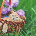猫にとって危険な『春の行事』のトラブル4選!飼い主が事前にすべき対…