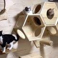 猫ちゃん大集合!5匹一緒の写真を撮りたい