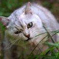 猫ちゃんにとって危険な植物3選!食べてしまったらどうしたらいい?