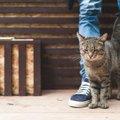 猫が飼い主より偉い!と思ってるかもしれない5つの仕草