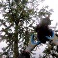 助けを求め木の上を動き回る猫。ついに枝が折れて…ヒヤヒヤのレスキュー