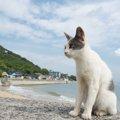 関西の猫島おすすめ4選!行き方やスポットまとめ