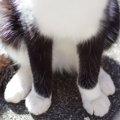 猫のお腹が白いのはどうして?意外と知らなかった豆知識