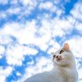 猫のフィラリア症とは?症状や治療、予防方法について