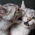 猫が『激しく噛んでくる』ときの原因4つと対処法
