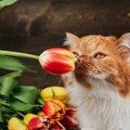 チューリップは猫に絶対NG!命に関わる春の花5つ