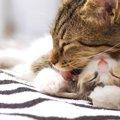 猫が手をなめる3つの理由