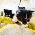 母猫から奪い子猫だけ捨てる悲劇…残酷な負の連鎖を止めるには?