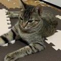 【爆笑】なんで…?ボロボロの襖の前で凛々しい表情を浮かべる猫さん♡