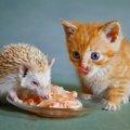 猫とハリネズミを一緒に飼う事はできる?注意する3つの事